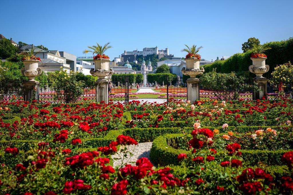 the rose garden of mirabell garden