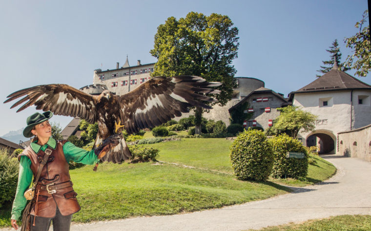falconry at the fortress of Werfen